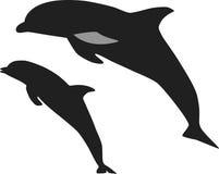 El salto de los delfínes foto de archivo