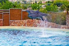 El salto de los delfínes Fotografía de archivo