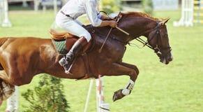 El salto del caballo Foto de archivo libre de regalías