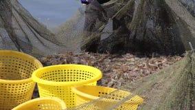 El salto del camarón metrajes