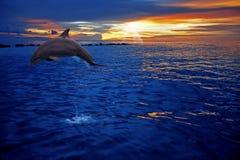 El salto del delfín imagen de archivo