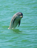 El salto del delfín Imagen de archivo libre de regalías