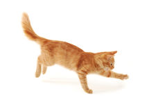 El salto del gatito fotografía de archivo libre de regalías