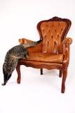 El salto del gato de la silla Foto de archivo libre de regalías