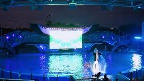 El salto fabuloso de la orca en la celebración de Shamu enciende para arriba la noche en luz de la celebración de Shamu encima de almacen de video