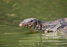 El salvator del Varanus del lagarto de monitor vive en el parque de Lumpini Fotos de archivo libres de regalías