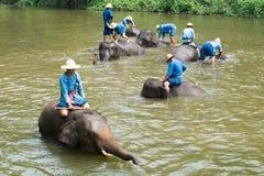El santuario del elefante de la demostración Foto de archivo