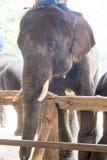 El santuario del elefante de la demostración Fotos de archivo