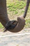 El santuario del elefante de la demostración Imagenes de archivo