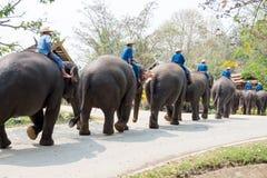 El santuario del elefante de la demostración Imágenes de archivo libres de regalías