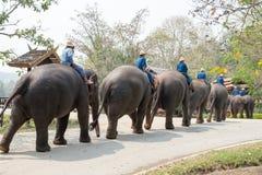 El santuario del elefante de la demostración Foto de archivo libre de regalías