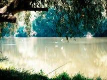 El sauce colgó sus hojas al agua Los pájaros descendieron al río para alimentar Cañas de pescar sobre el río imagen de archivo