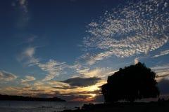 El sauce de Edgewater en puesta del sol del verano Imagen de archivo