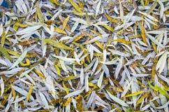 El sauce del otoño sale del fondo Imagenes de archivo
