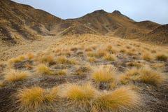 El scape hermoso de la tierra de la hierba empenacha la montaña en el waitaki distric Fotografía de archivo libre de regalías