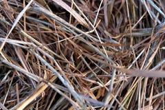 El seco presionada, la hierba del año pasado imagen de archivo libre de regalías