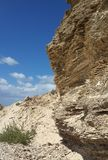 El sedimento de la piedra arenisca acodó el acantilado con una planta verde fotos de archivo libres de regalías