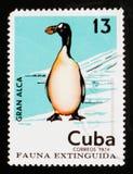 El sello cubano muestra los impennis del Pinguinus de la gran alca, serie extinto de los pájaros, circa 1974 imagen de archivo libre de regalías