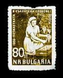 El sello de Bulgaria muestra a la mujer del trabajador que cosecha las uvas, realización temprana del plan de 5 años, circa 1959 Imagenes de archivo