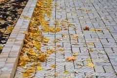 El sendero con amarillo caido se va en el parque Imagenes de archivo