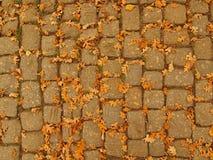 El sendero de la piedra del adoquín del parque del otoño con el roble anaranjado seco se va, hoja colorida Imagenes de archivo