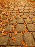 El sendero de la piedra del adoquín del parque del otoño con el roble anaranjado seco se va, hoja colorida Imagen de archivo