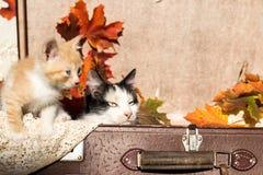 El sentarse de dos gatos Foto de archivo