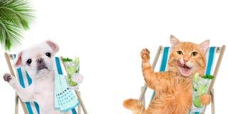 El sentarse de relajación del gato y del perro en deckchair con el cóctel fotografía de archivo libre de regalías