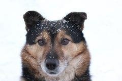 El sentarse del pequeño perro al aire libre con nieve en su cabeza Foto de archivo
