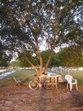 El sentarse en un banco de parque Fotos de archivo libres de regalías