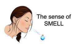 El sentido del olfato Fotografía de archivo libre de regalías
