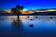 Silueta del árbol y de la puesta del sol en la playa silenciosa Imágenes de archivo libres de regalías