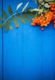 El serbal otoñal del fondo da fruto tablero de madera azul Foto de archivo