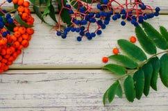 El serbal, uvas salvajes, sale del fondo de madera, Imagen de archivo