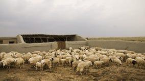 El sheepfold Imágenes de archivo libres de regalías