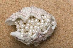 El shell Fotos de archivo