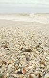 El shell cubrió la playa Imagen de archivo libre de regalías