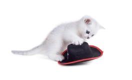 El shorthair británico del gatito blanco juega con un sombrero Aislado en whi Imagen de archivo libre de regalías