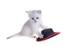El shorthair británico del gatito blanco juega con un sombrero Aislado en whi Fotos de archivo libres de regalías