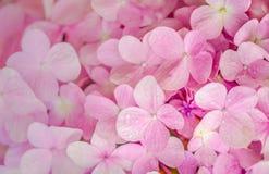 El significar rosado de las flores del amor Foto de archivo libre de regalías