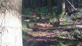 El silencio en el bosque Foto de archivo