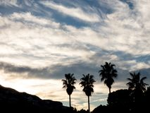 El siluette de palmas y de la puesta del sol fotos de archivo libres de regalías
