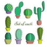 El sistema de cactus en potes Fotos de archivo