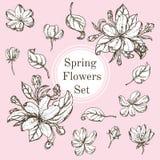 El sistema de elementos blancos y negros de la naturaleza, sale por separado de la flor, floreciendo ramifica cereza, flor de la  Fotos de archivo libres de regalías