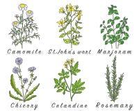 El sistema de especias, de hierbas y de officinale planta iconos Fotos de archivo libres de regalías