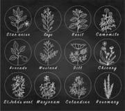 El sistema de especias, de hierbas y de officinale planta iconos Plantas curativas Foto de archivo libre de regalías