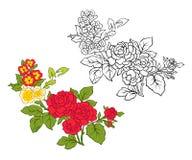 El sistema de esquema y de vintage coloreado florece el ramo o el modelo Fotos de archivo libres de regalías