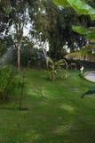 El sistema de irrigación de regadera está regando el parque del césped, palma, árboles, arbustos foto de archivo libre de regalías