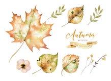 El sistema de la acuarela roja y amarilla del otoño se va y las bayas, decoración dibujada mano de los elementos del follaje del  Fotografía de archivo libre de regalías