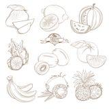 El sistema de la mano del esquema dibujado da fruto con las hojas (mango, limón, wat libre illustration